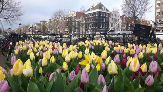 Amsterdam_Tulpen-festival