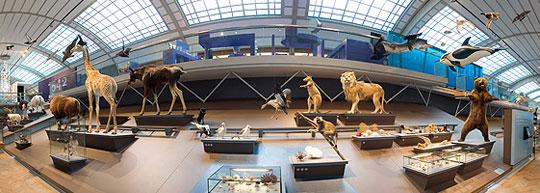 Brussel_museum-natuurwetenschappen