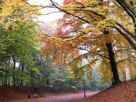 Brussel_zonienwoud-bos