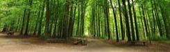 Wandelen in een oerbos vlakbij Brussel