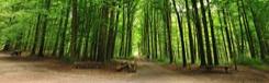 Relaxen in het Zoniënwoud